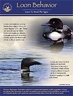 loon-behavior-pdf