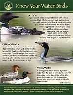 waterbirds-pdf
