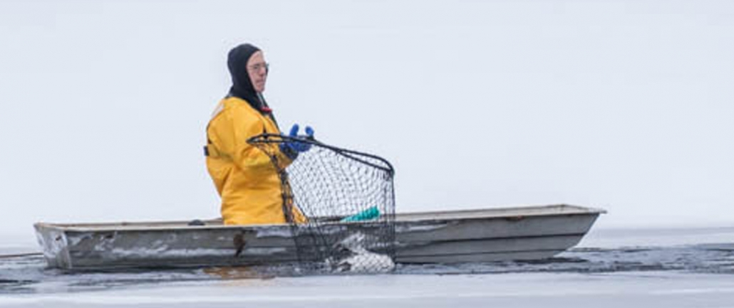 Loon Rescues