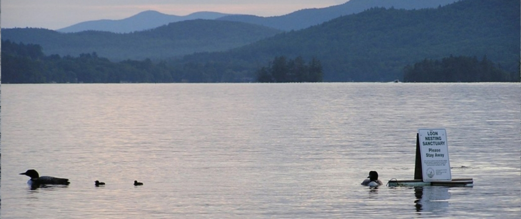 Squam Lake Loon Initiative